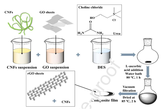 北京林业大学姚春丽:低共熔溶剂用于合成柔性、高导电性的CNF/rGO复合膜